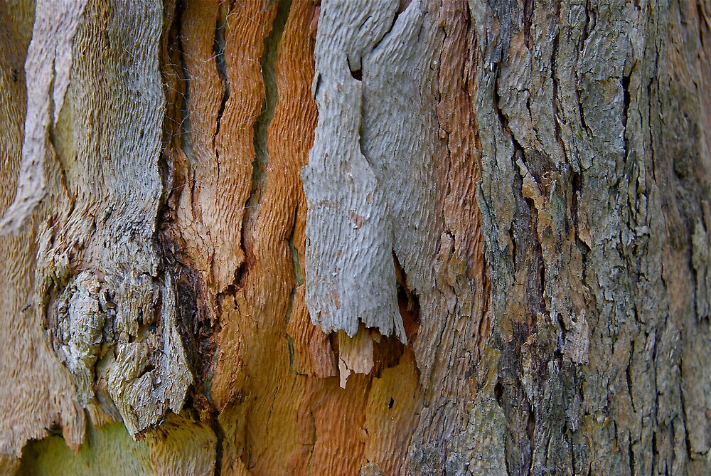 Nature's Fabric by Roslyn Slater