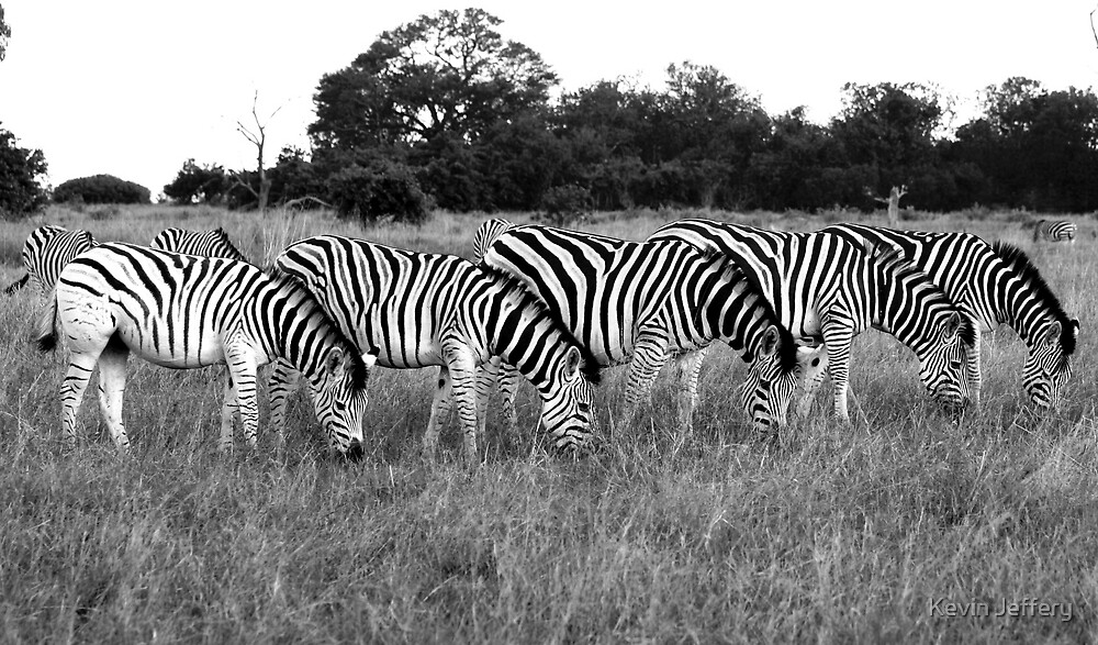 Zebra's by Kevin Jeffery