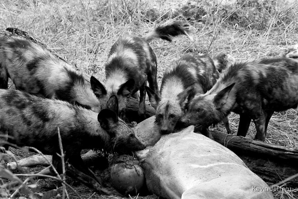 Wild Dog Kill by Kevin Jeffery