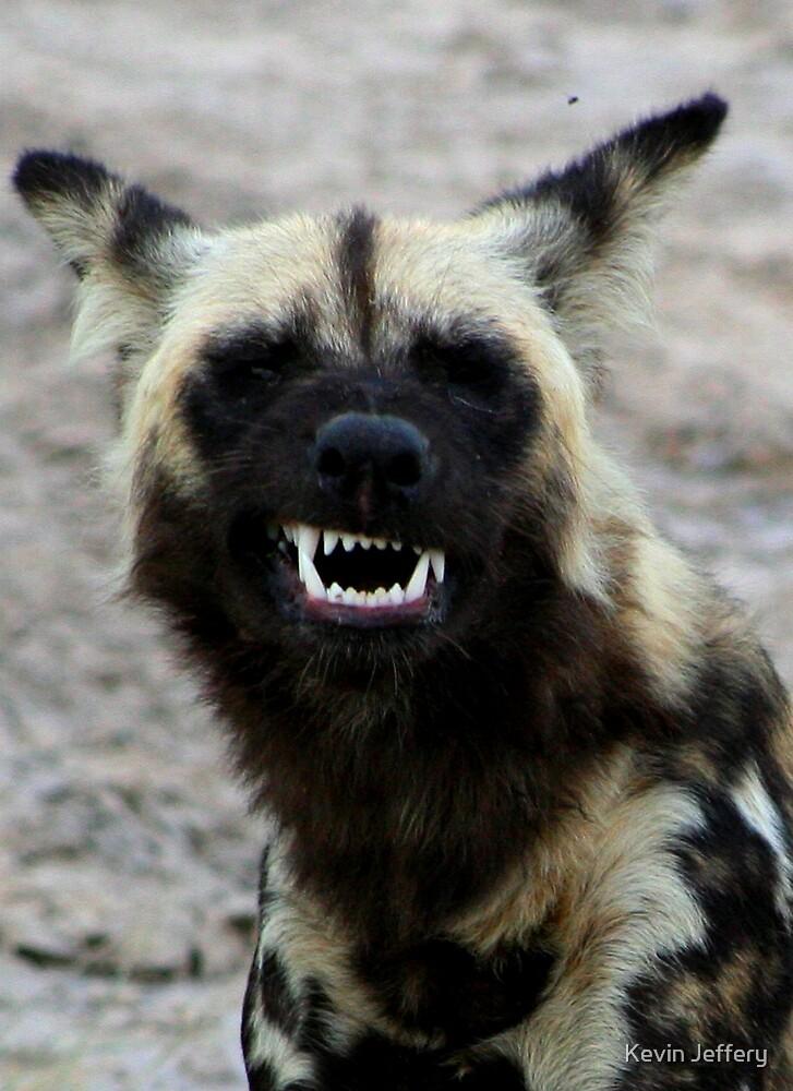 Wild Dog Grin by Kevin Jeffery