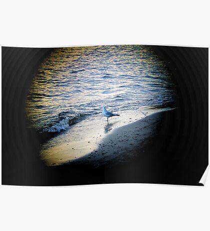 Beach Bird In Light Poster