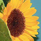 Sunflower on Blue by Lynda Anne Williams