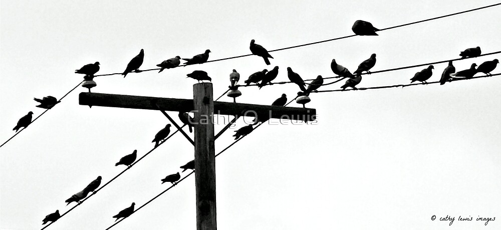 Wired Birds  by Cathy O. Lewis
