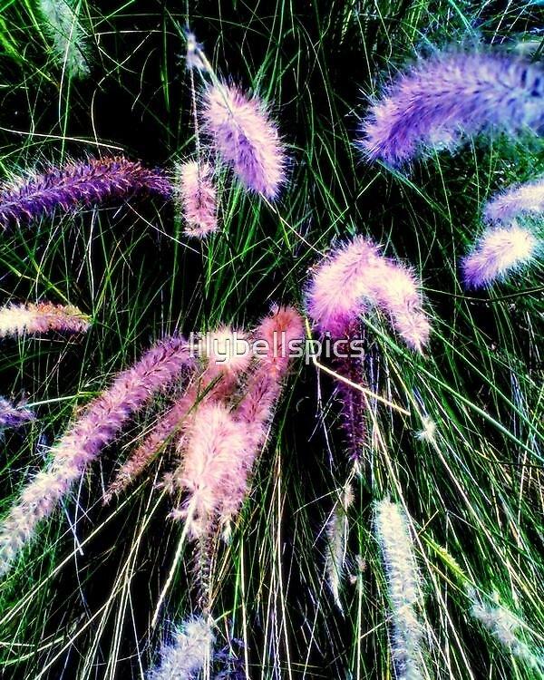Wyld Grass.. by lilybellspics