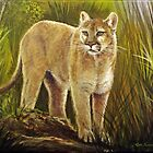 American Mountain Lion by Rich Summers