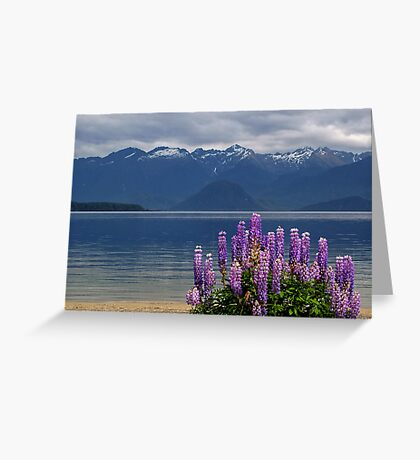 manapouri lupins Greeting Card