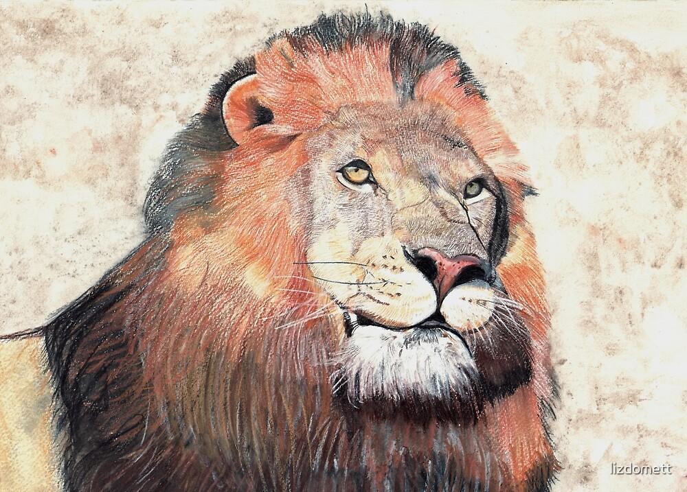 Lion by lizdomett