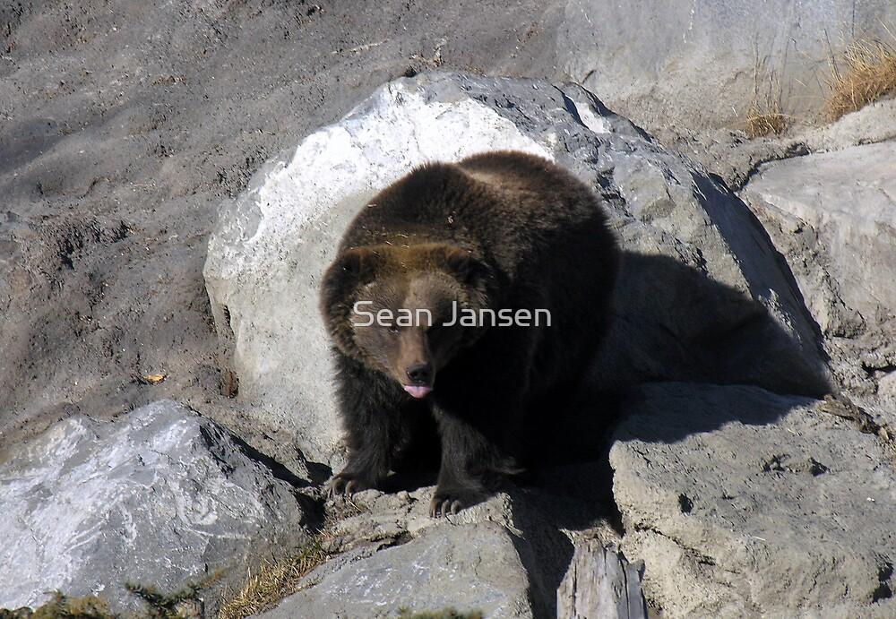 Grizz by Sean Jansen