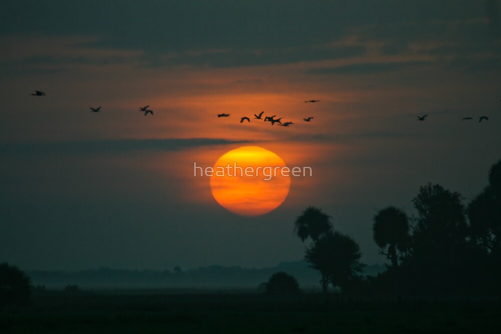 Southwest Florida Sunrise by heathergreen