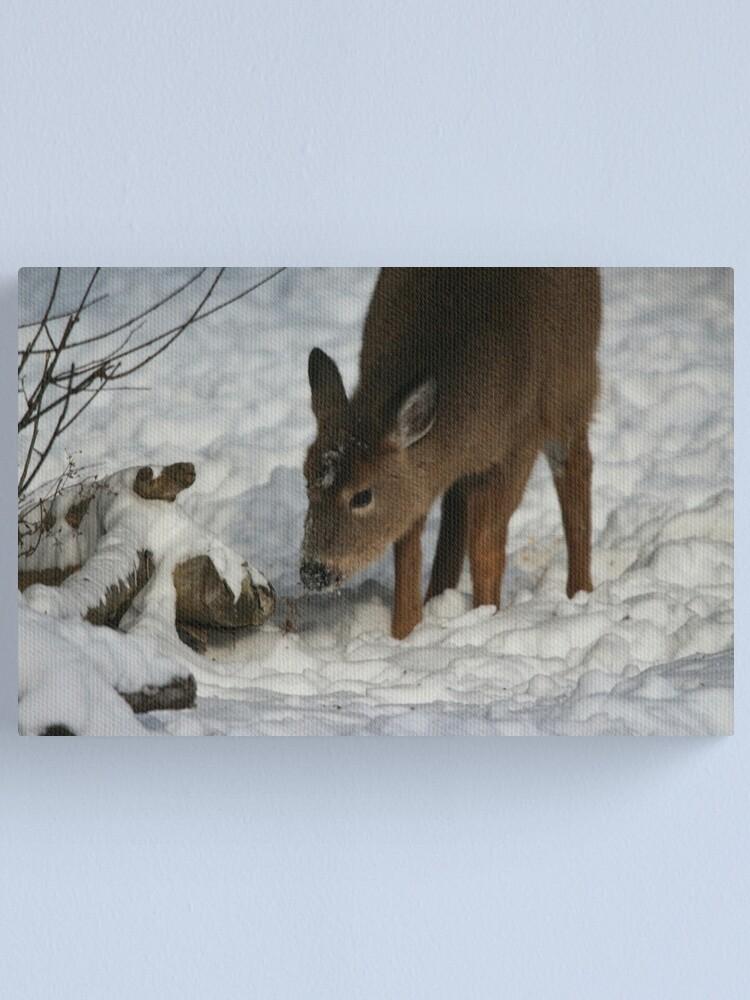 Alternate view of Winter Wonder Canvas Print