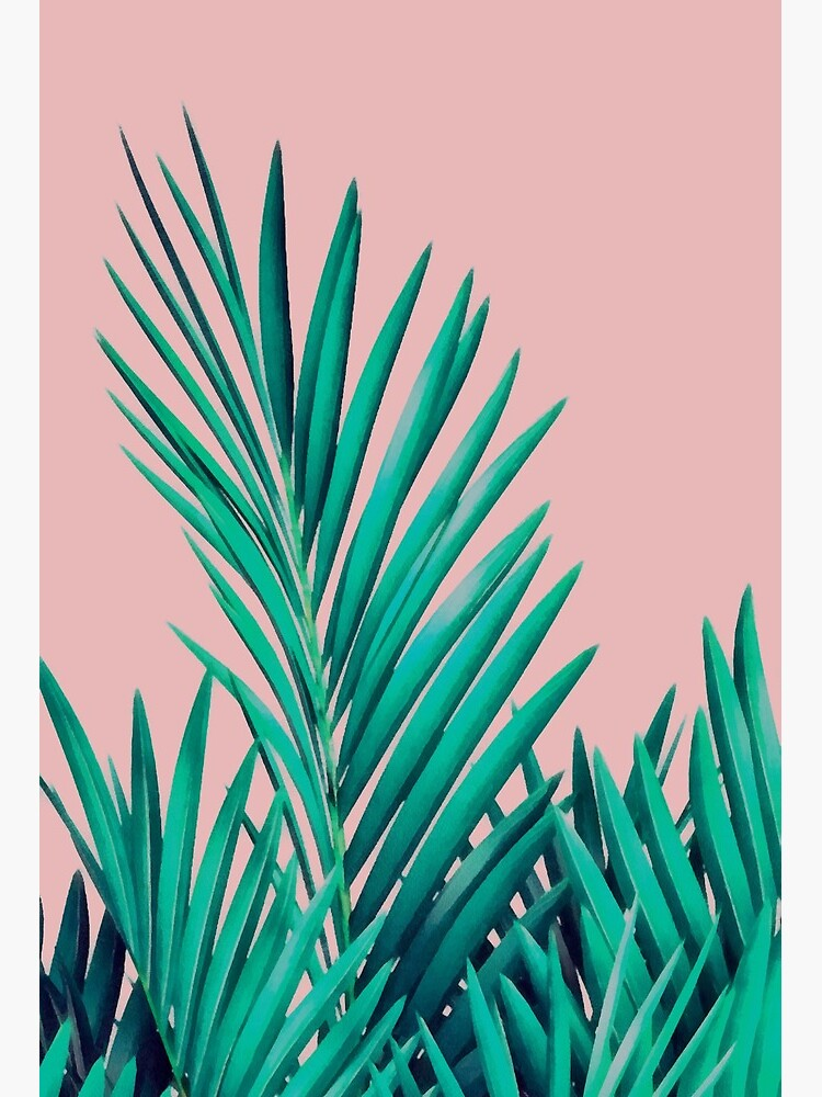 Tropical Palm Leaves On Pink Background Art Board Print By Bangint Redbubble Tropical leaves free background free photo. redbubble