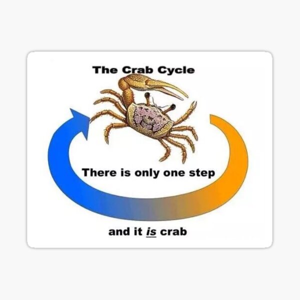 the crab cycle Sticker