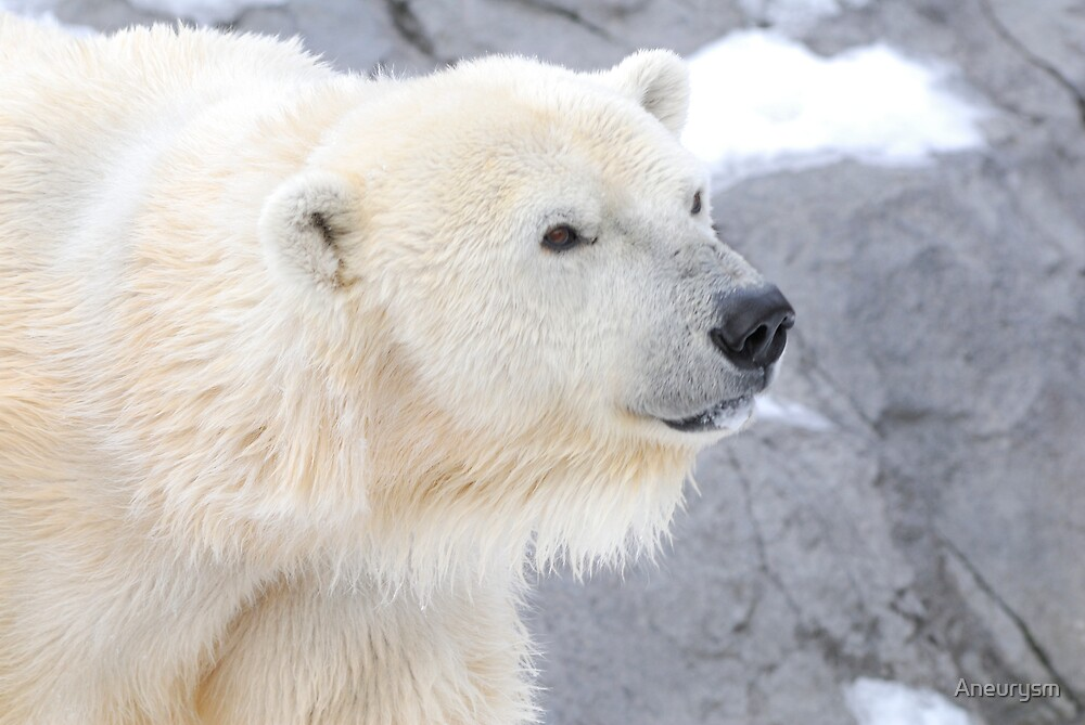 Polar Bear by Aneurysm