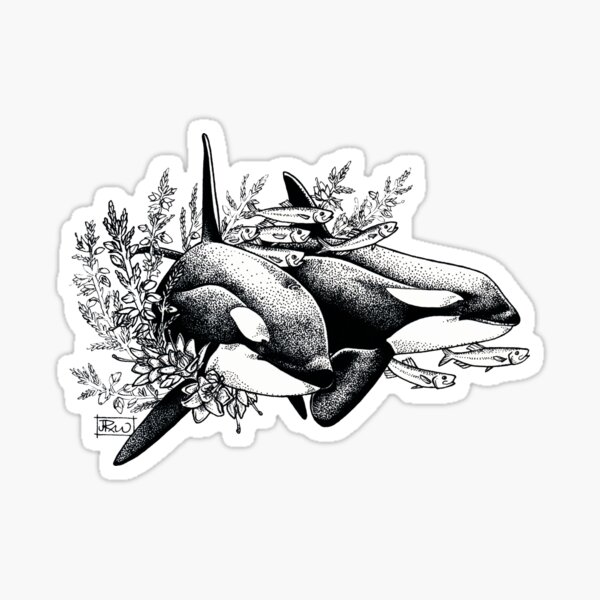 Orcas of Norway Sticker