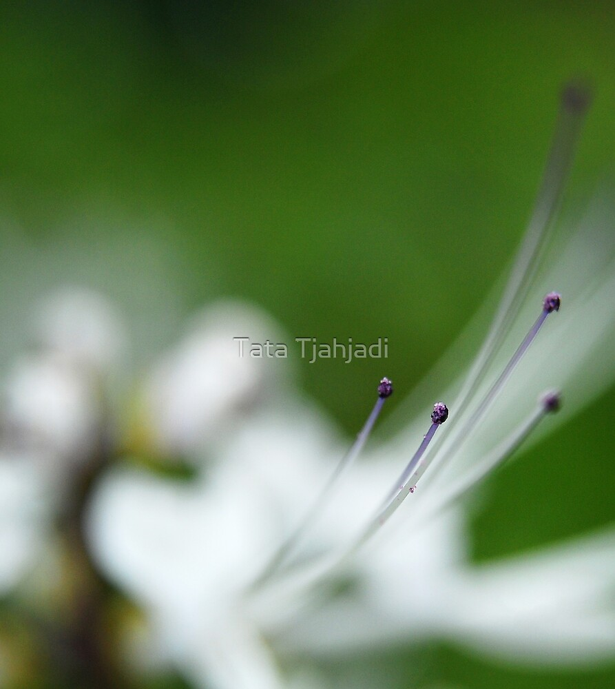 the dots of simple nature by Tata Tjahjadi