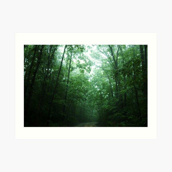 Trees Along The Path Art Print