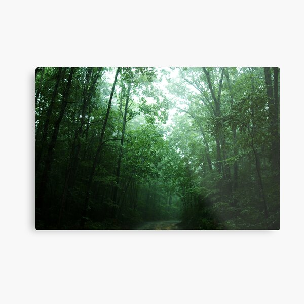 Trees Along The Path Metal Print