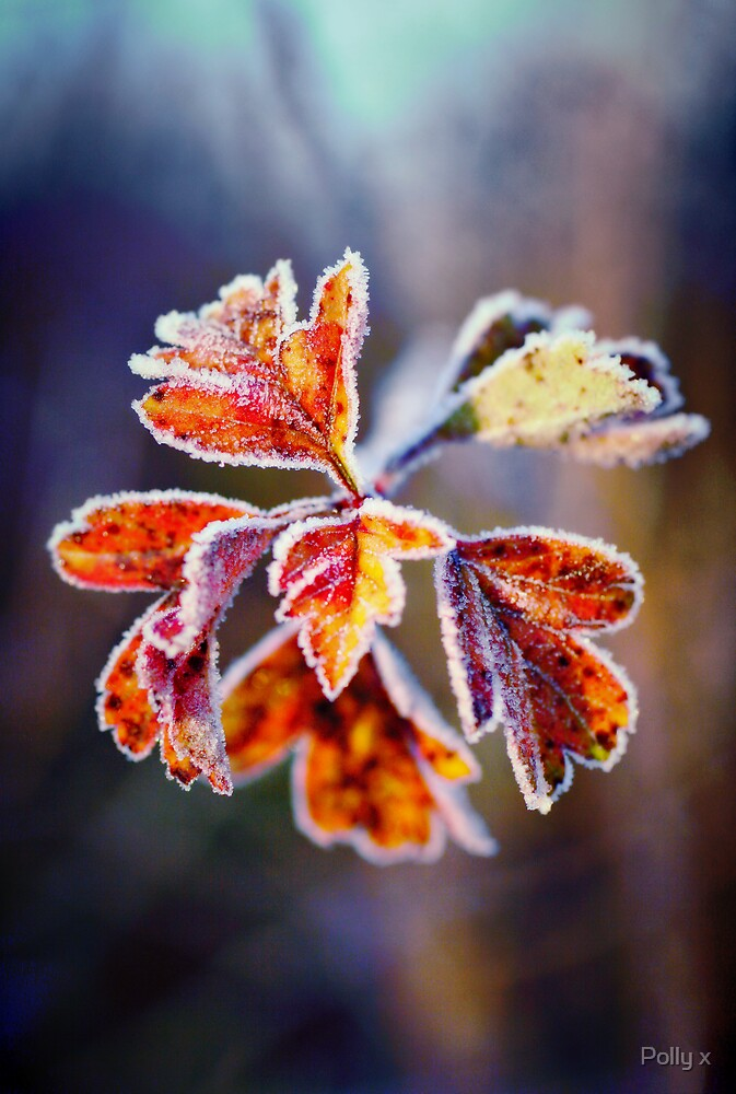 Frosted by Polly x