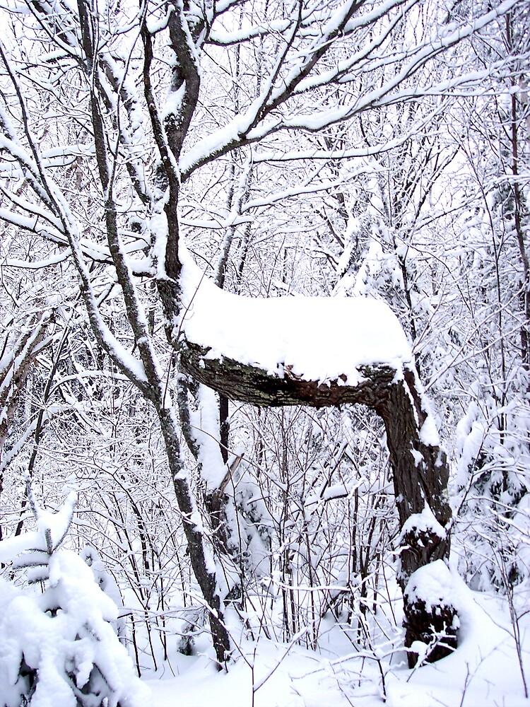 Stag like Tree  Trail by Braedene