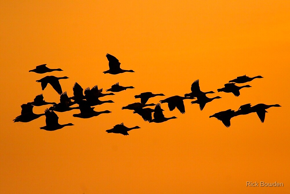 Geese silhouette by Rick Bowden