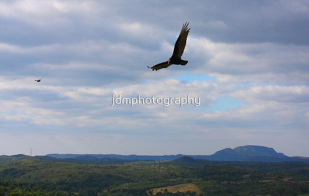 Turkey Vulture Landscape........ by jdmphotography