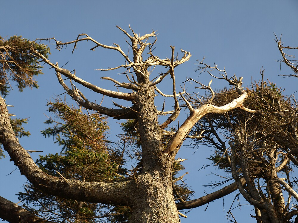 Dying Tree by formalin6