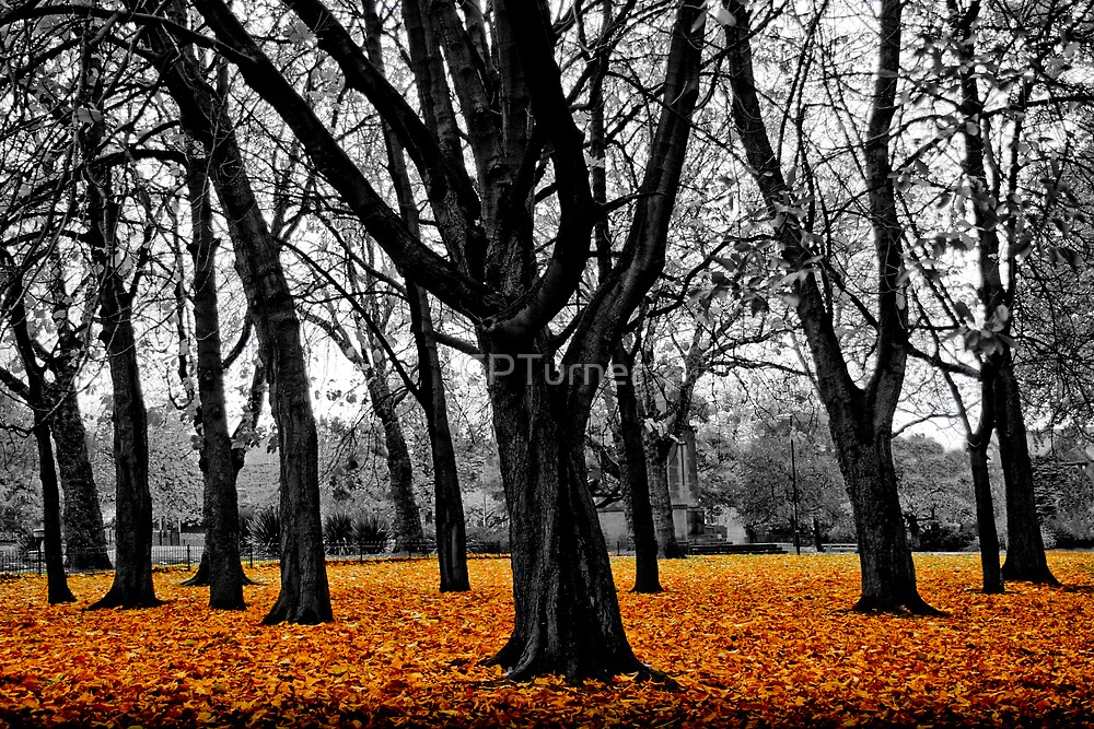 Autumn Gold by CPTurner