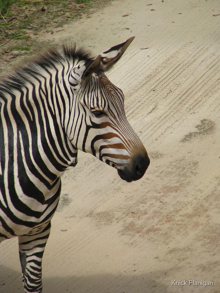 Zebra by Knick Flanigan