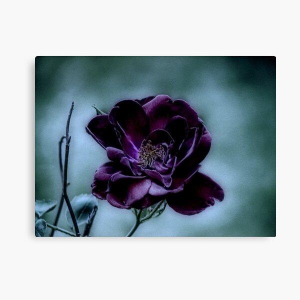 Beauty Surviving a Gloomy Night Canvas Print