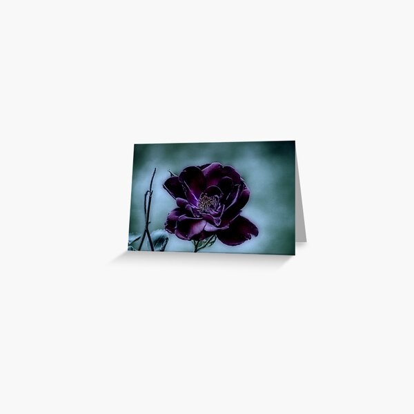 Beauty Surviving a Gloomy Night Greeting Card