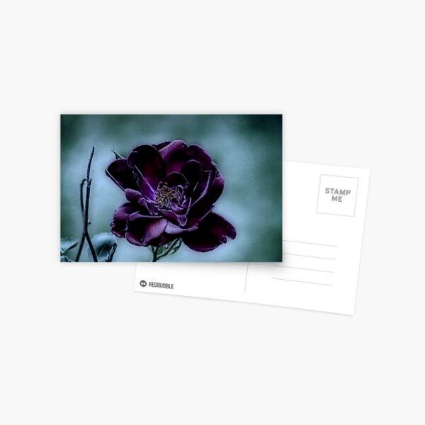 Beauty Surviving a Gloomy Night Postcard