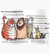 Cat bigness Poster