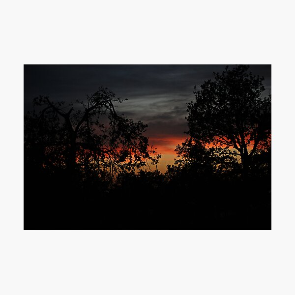 Trees On Sunset Photographic Print