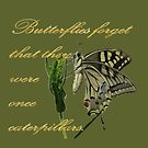 Butterflies Forget They Were Once Caterpillars Proverbial Text by taiche