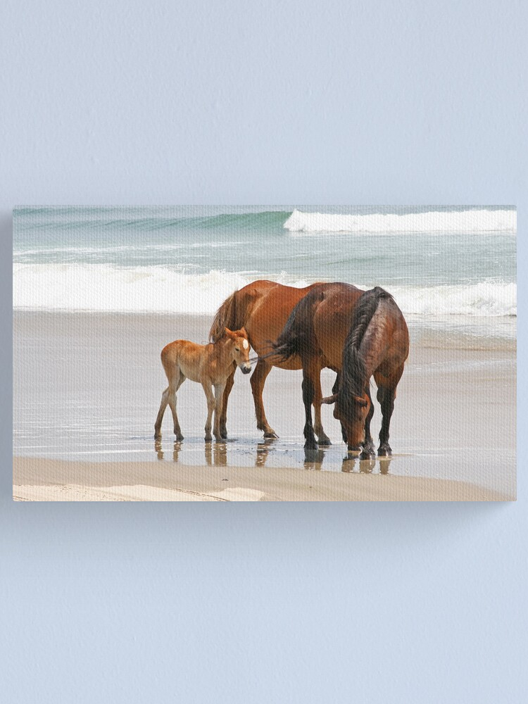 Alternate view of Family of Wild Horses on the Beach Canvas Print