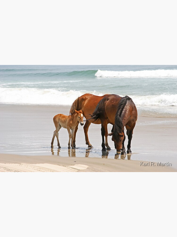 Family of Wild Horses on the Beach by SirEagle