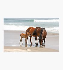 Family of Wild Horses on the Beach Photographic Print