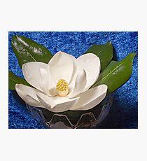 Magnolia on Blue Photographic Print