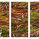 Wild Grass Triptych by Kitsmumma