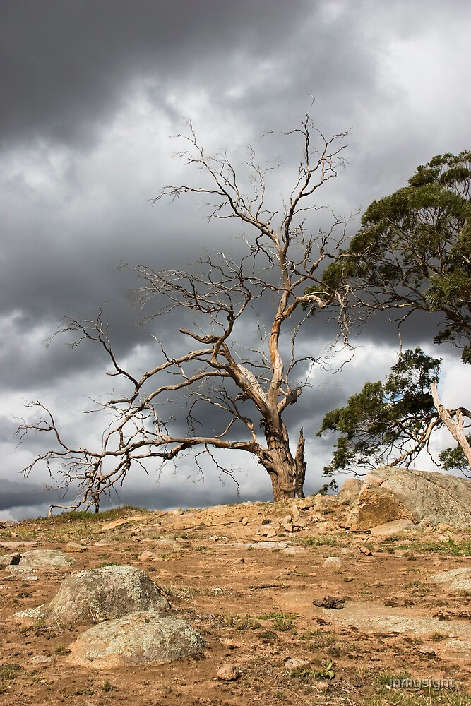 Tree and Storm Clouds by inmysight