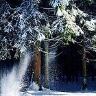 Snowy Forest.....Black Forest by Imi Koetz