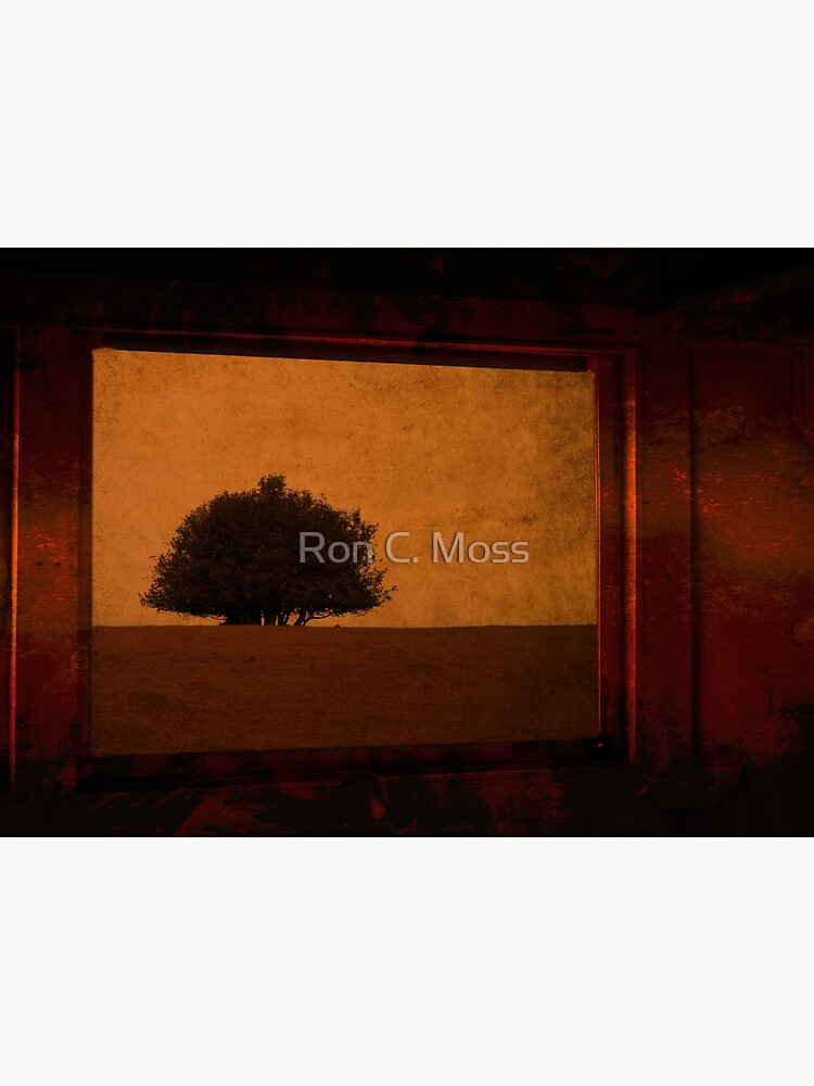 one tree by ronmoss