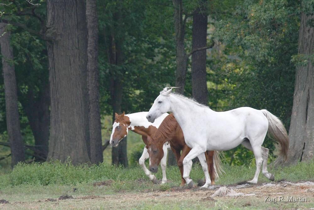 Three Horses by Karl R. Martin