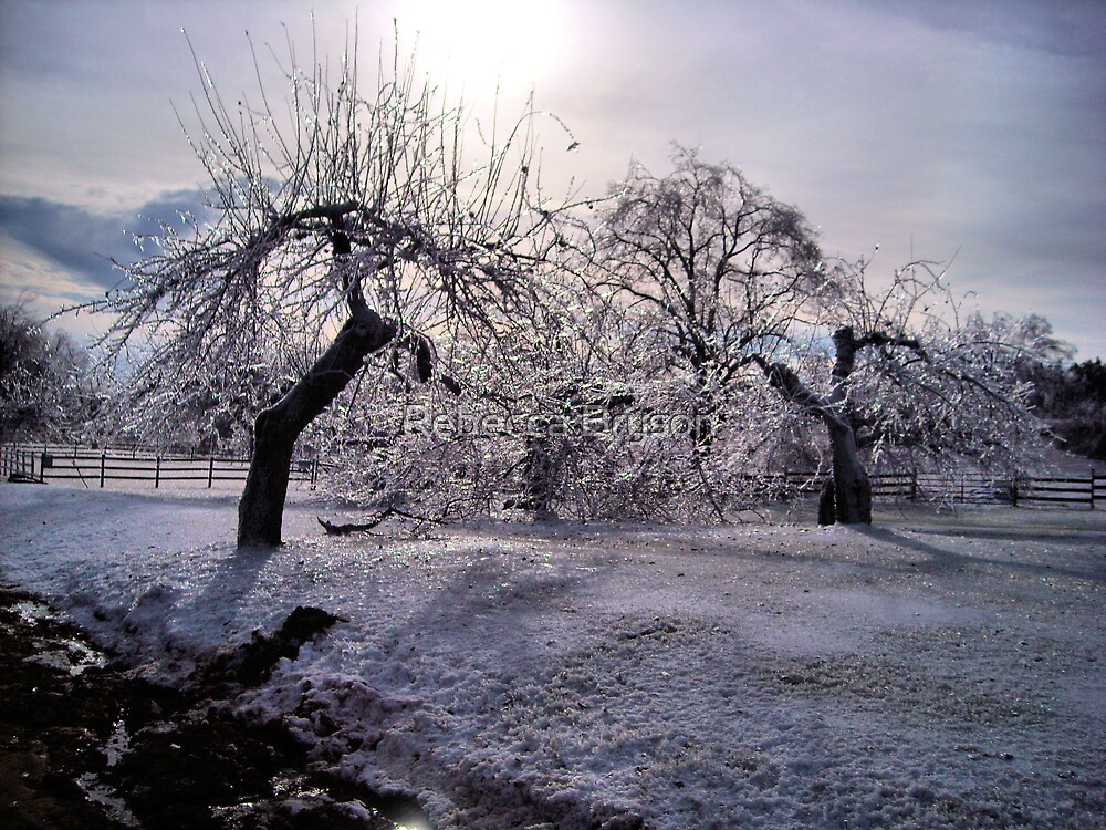 Iced Winter at the Farm by Rebecca Bryson