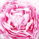 contemporary petals shabby chic french country pink peony by lfang77