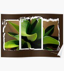 Tri Plant Poster