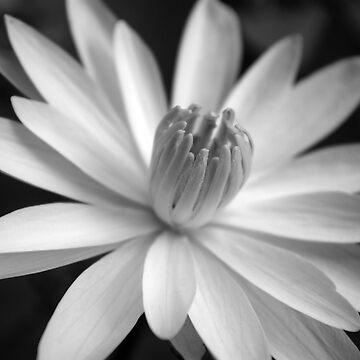 Luminous White Night Bloomer (B&W) by artropica