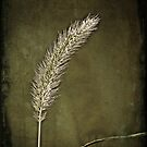 just a weed by Angel Warda