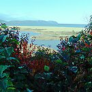 Cape North and Marshlands by George Cousins