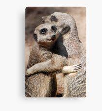Hugging Meerkats Metal Print